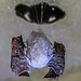 Moth and Spiders Eggs (Batman Shadow?)