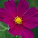 20140804_garden flowers_0032