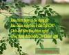 35800294081_b160ebf70b_t