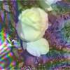 35995973182_abb9e0b2e5_t