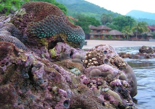 coralgarden (25)