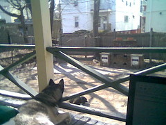 Back porch, laptop, Circe and Prospero