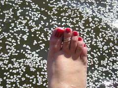 toe ring petals