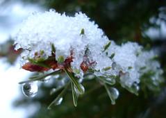Gouttes-de-neige