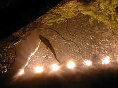 lights01.jpg
