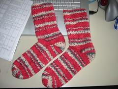 H's Ladybug Socks