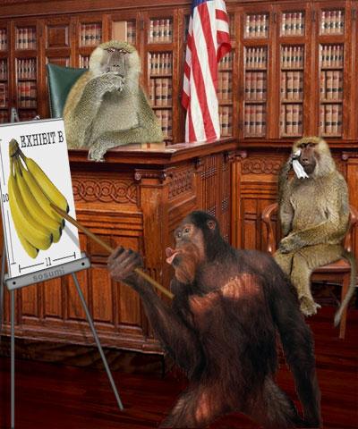 monkey_court