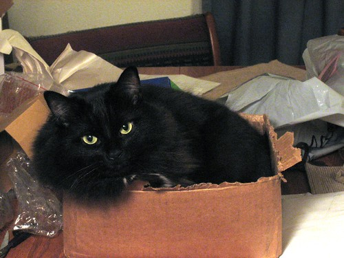 Fatty in a box