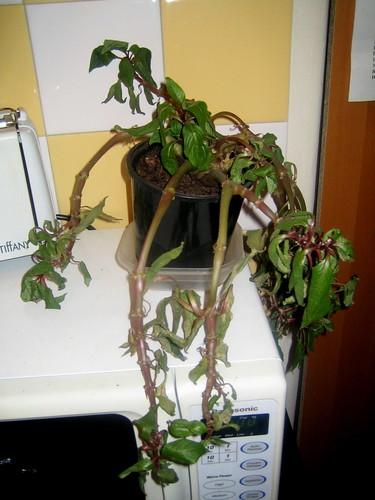 Heatstruck plant