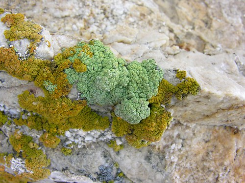 Some lichen at the Lovelock Cave