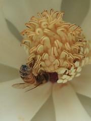 花と虫 その三