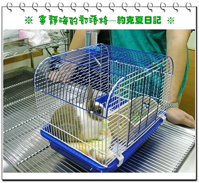約克夏日記_20051220_手術台上的約克夏