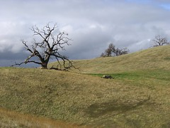 Ohlone Wilderness