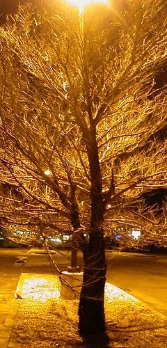 Tree-low