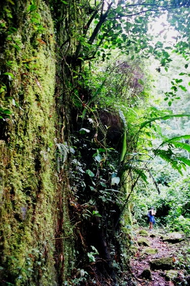 a moss-covered wall in the jungle