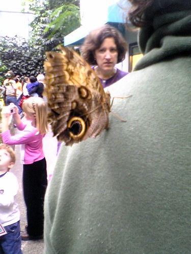 butterfly, crazy lady, leff's back