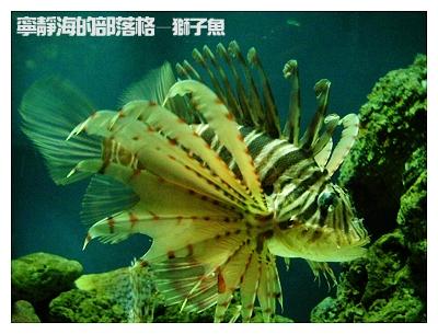 夏季感冬之旅_0117_海生館獅子魚