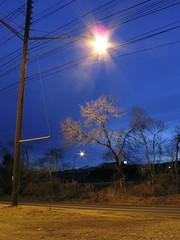 Street lamp & tree