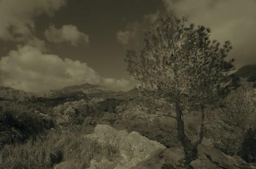 View from the rock garden near Lluc