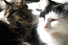 picture of our cats falcon & kelly