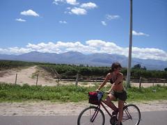 Pato riding a bike through a vineyard