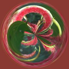 Amazing Circle 01
