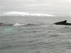 ANT2005 - Whale Watching, part 3