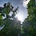 :;3 Gopeng, Gaharu Tea Valley half-day trip. 📷 #teavalley #malaysia #tourist #attraction #sun #tree #sky #green #blue