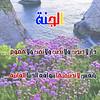 36149895264_43485407fc_t