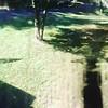 37299079941_fa0b46bfd7_t