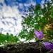 Flower at Cascadilla Gorge