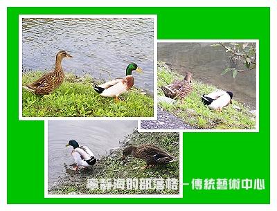 夏季感冬之旅_0120_綠頭鴨夫妻