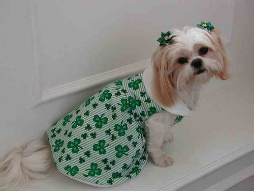 st_patricks_shamrock_dog_dress-1