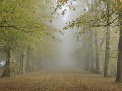 Misty avenue photo by net_efekt