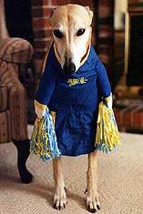 dog_cheerleader