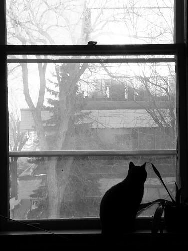 oskar sitting in a window