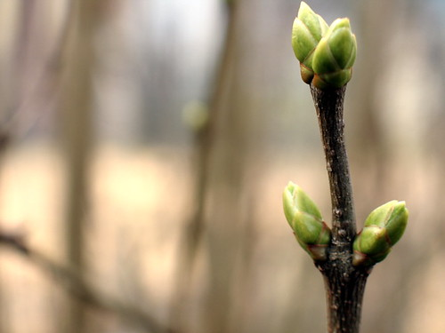 Signs of Spring!