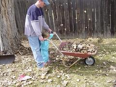 helping rake leaves 2