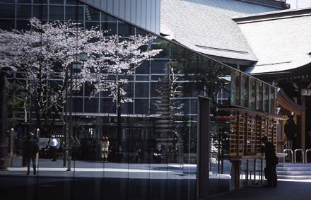窓に映る桜