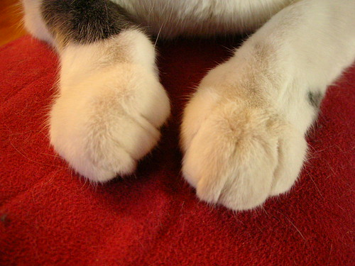 Another Paw Picture - Lola
