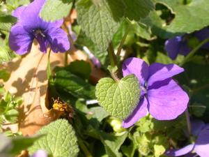 spring 4