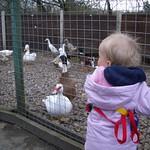 Quack Quack<br/>15 Apr 2006