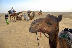 Camels and Tourists, Jaisalmer, Rajasthan, India Captured April 12, 2006.