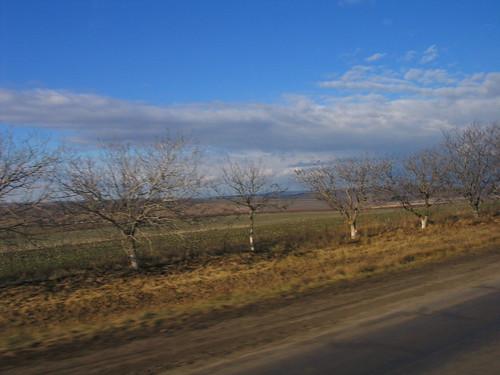 MOLDOVA FIGURSKI