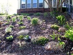 front hillside garden after