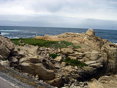 Point Joe - Rock