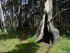 Crocker Grove - Trees I