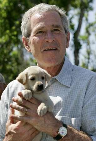 bush_puppy