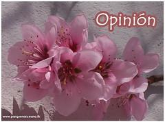 foto opinion