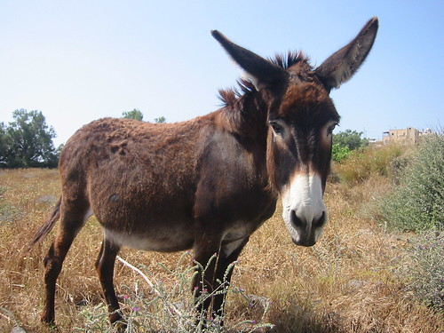 Donkey living by Boutari